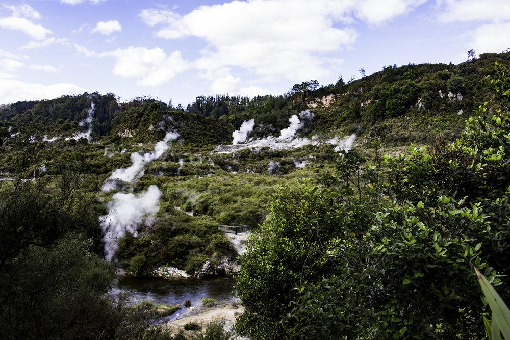 Te Puia Maori Grounds - Active Geysers