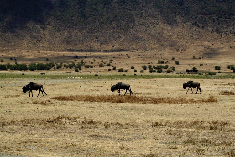 Ngorogoro Crater, Tanzania - Photo By: Ray Rui