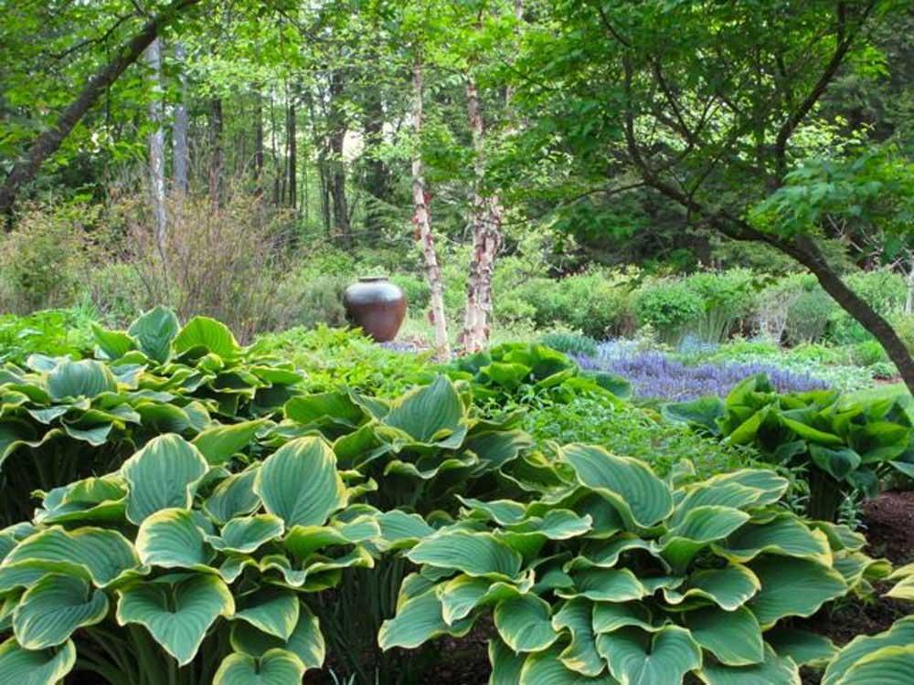 Gardens-MomHostas_web.jpg