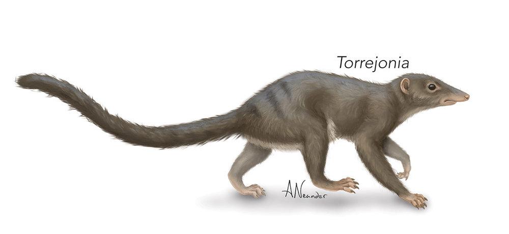Torrejonia