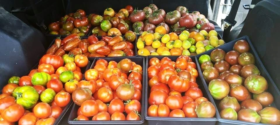 Tomatoes from Bluebird Farms
