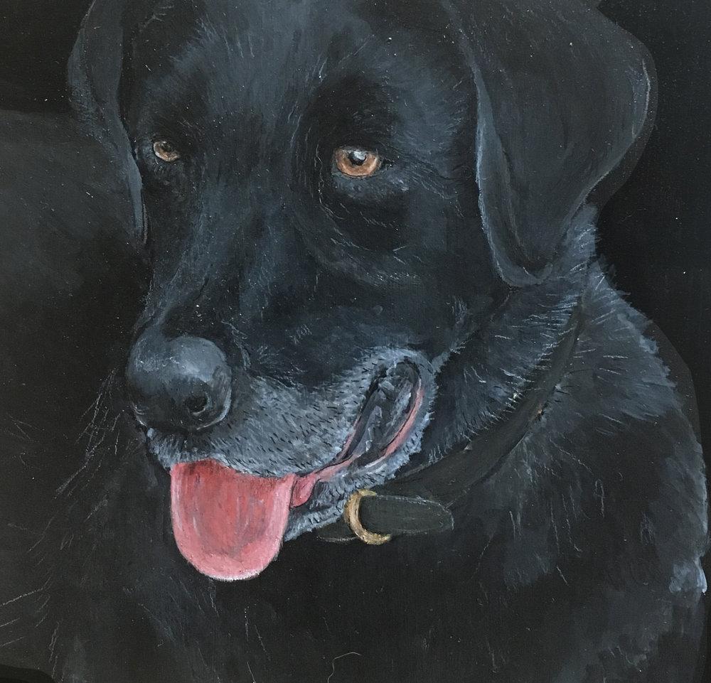 Pet Portrait: Pepper