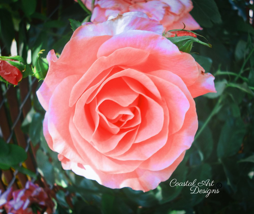flower-feathered-effect-peach-min.jpg