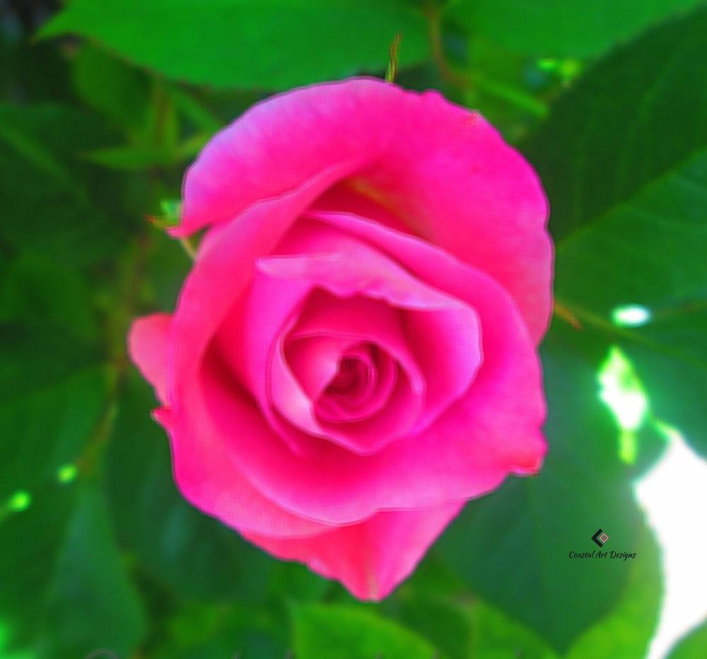 bright-pink-rose-print.jpg