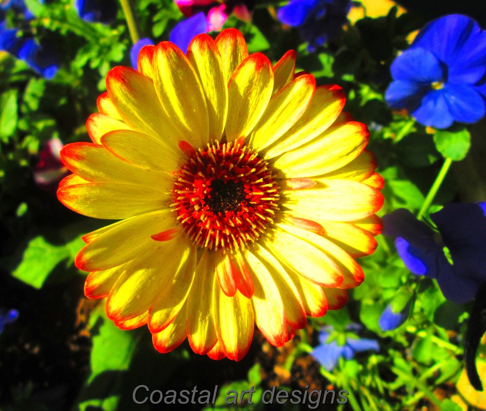 yellow-orange-flower.JPG