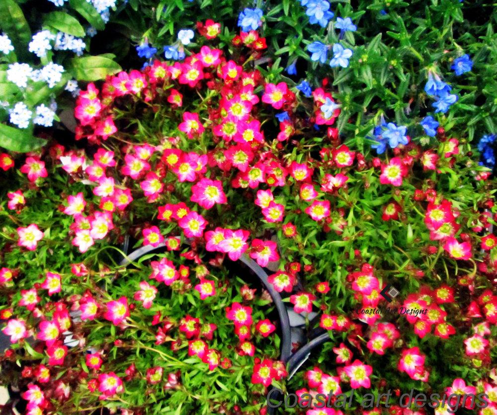 flower-bed-print.jpg
