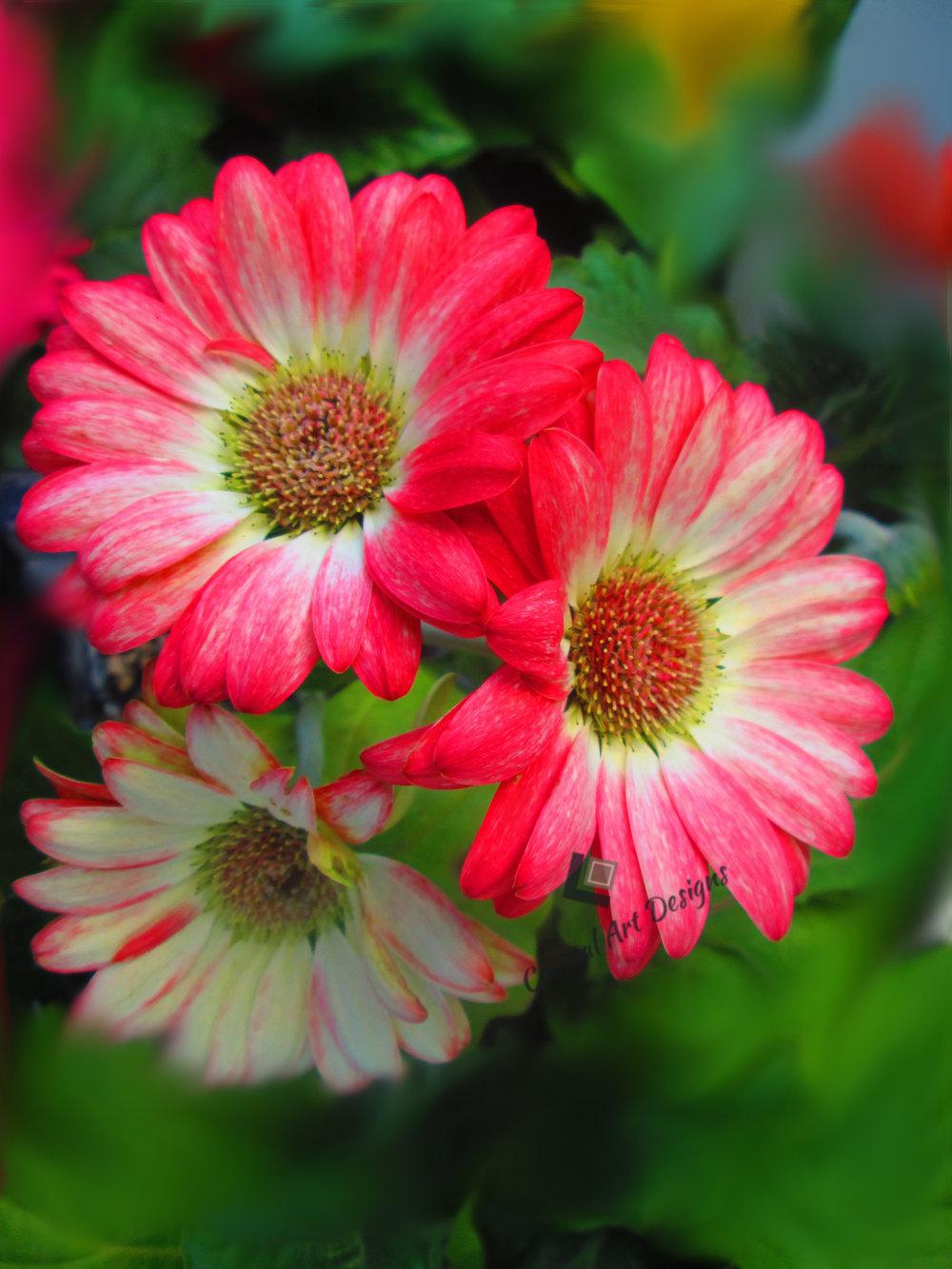 blurred-red-flower-print.jpg