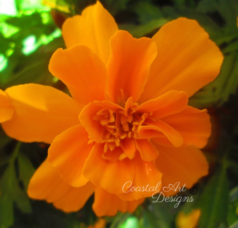 orange-flower-lily-min.jpg