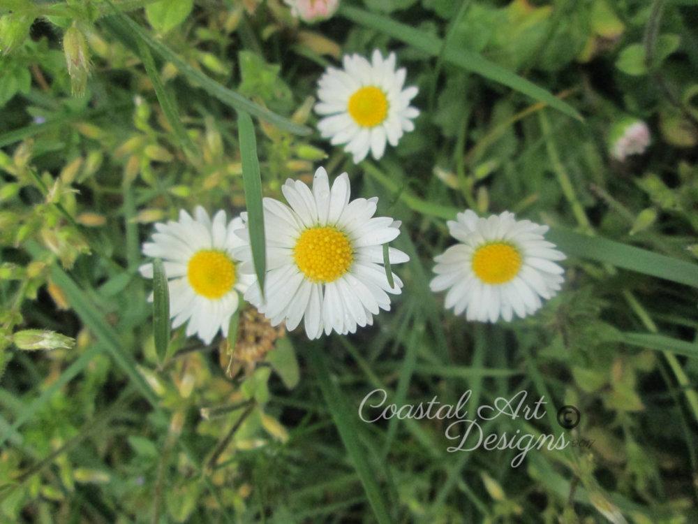 Perennials-white-flowers.jpg