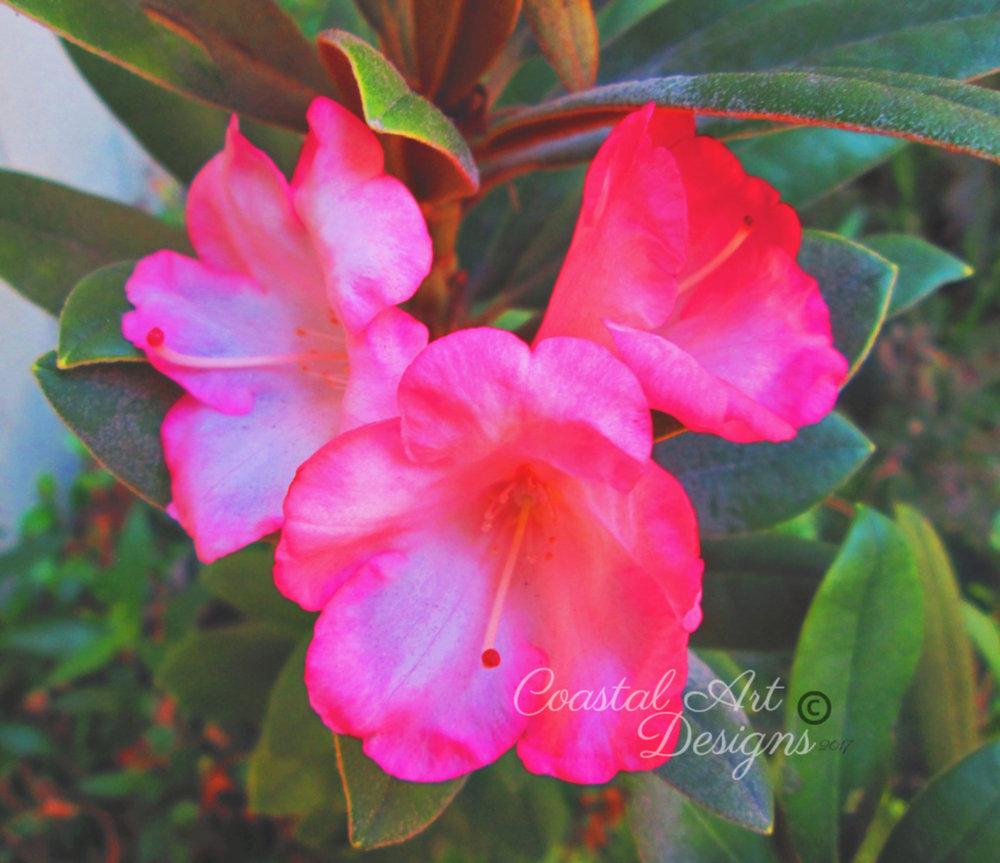 pink-bells-flower-min.jpg