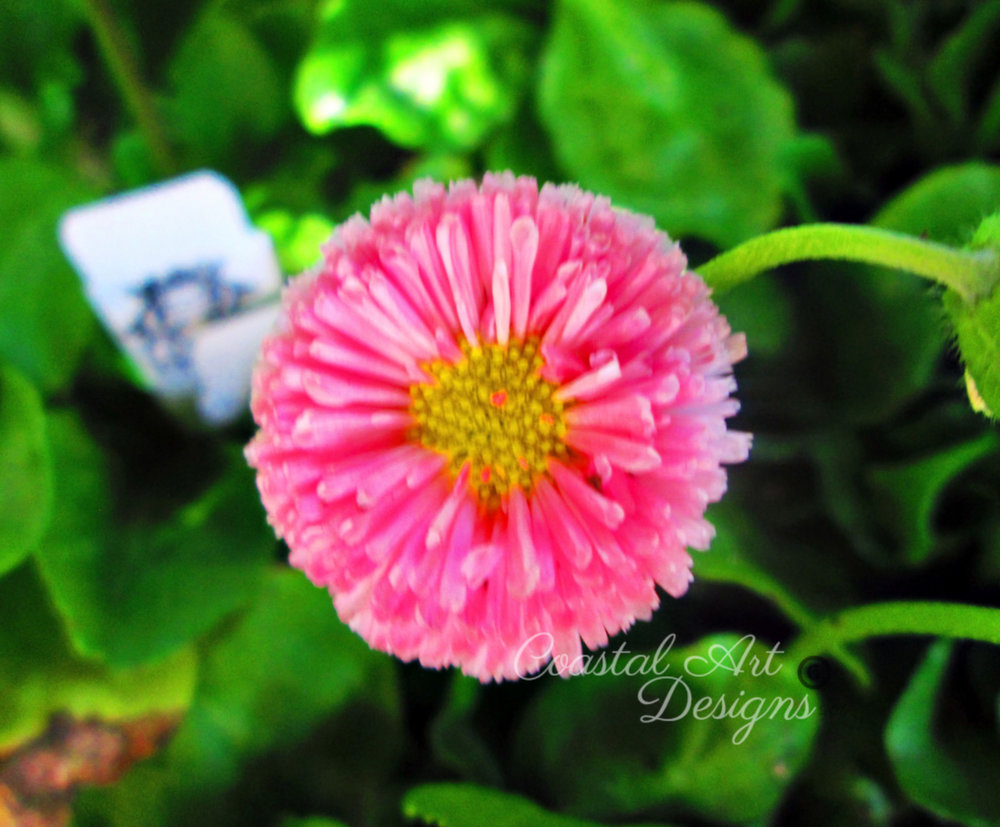 pink-fuzzy-flower-min.jpg
