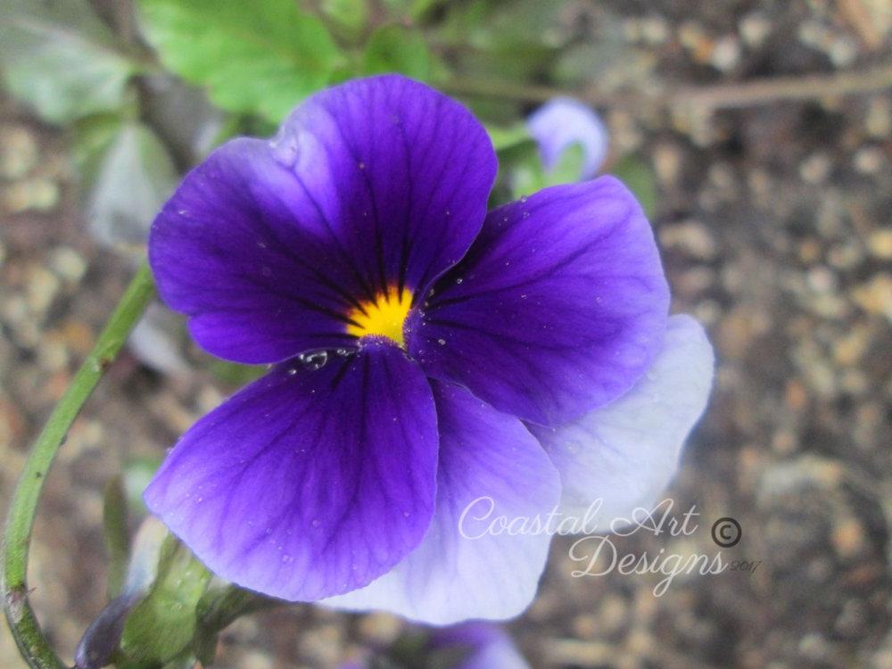 purple-flower-pasiey.jpg