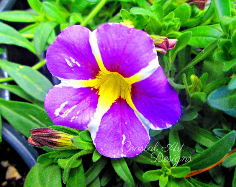 purple-yellow-white-perennials-flower.jpg
