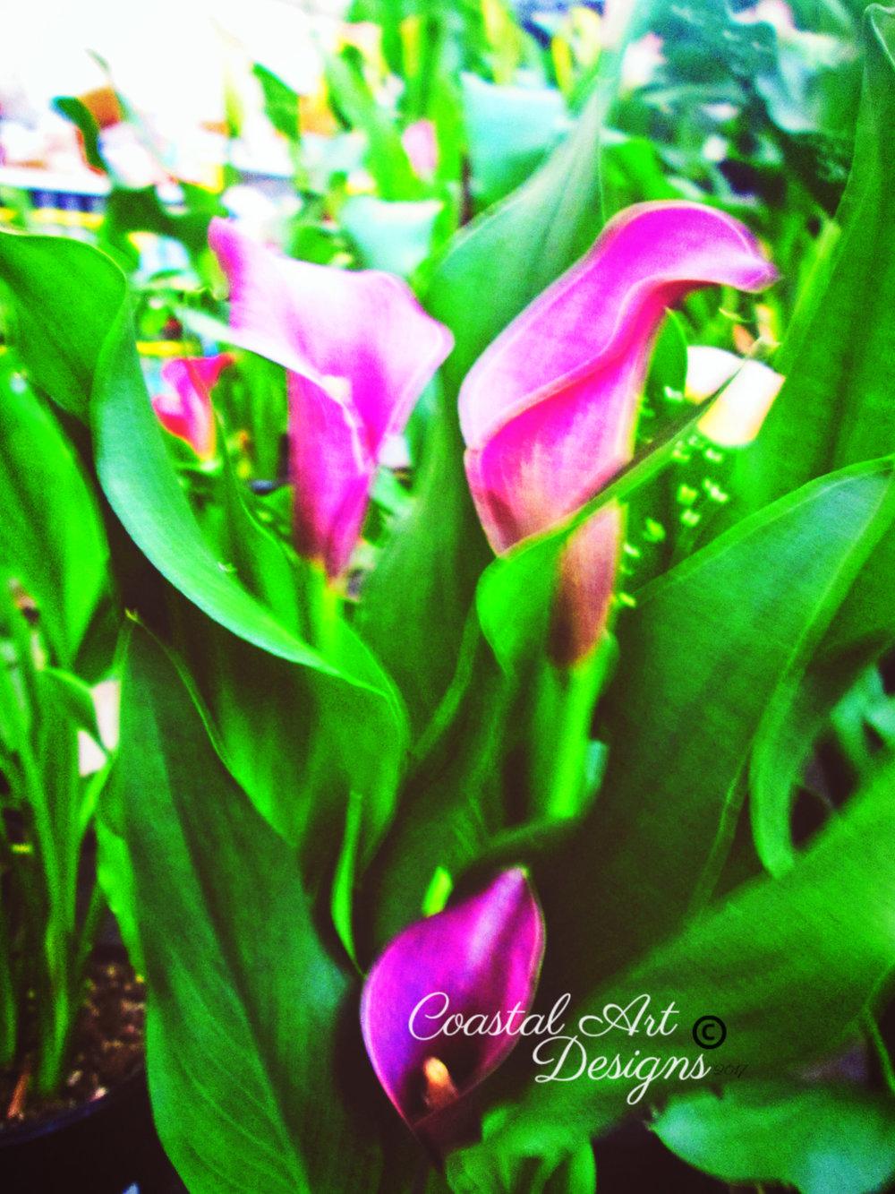 tulips-flower-photograph-print.jpg