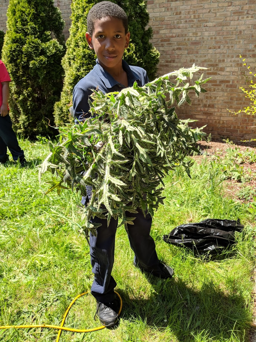 We pulled some giant weeds -