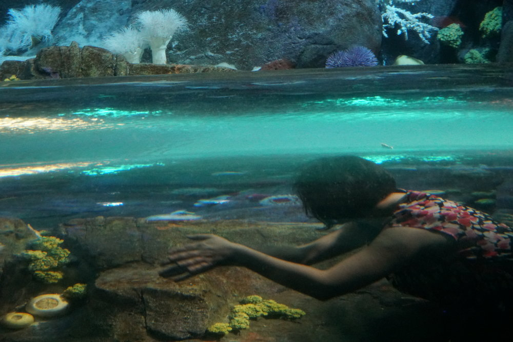 Global Cities staff met with educators (and residents) at the NY Aquarium -