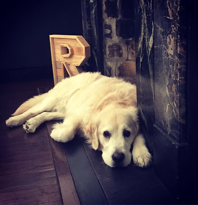 """And Lion was a little less restless"" 🦁 [not so] #restlesslion . . #bookstagram #booksforkids #dogbook #booksofinstagram #kidsbook #maplemansion #goldenretriever #goldensofinstagram #goldensofig #goldensofinsta #goldensofinstaworld #topdogphoto #dogsofig #dogsofinstagram #retreiveroftheday #ilovegolden_retrievers #retrieversgram #noladogs #nolanewsgram #slpets #goldenpupsquadfeature #nolapets"