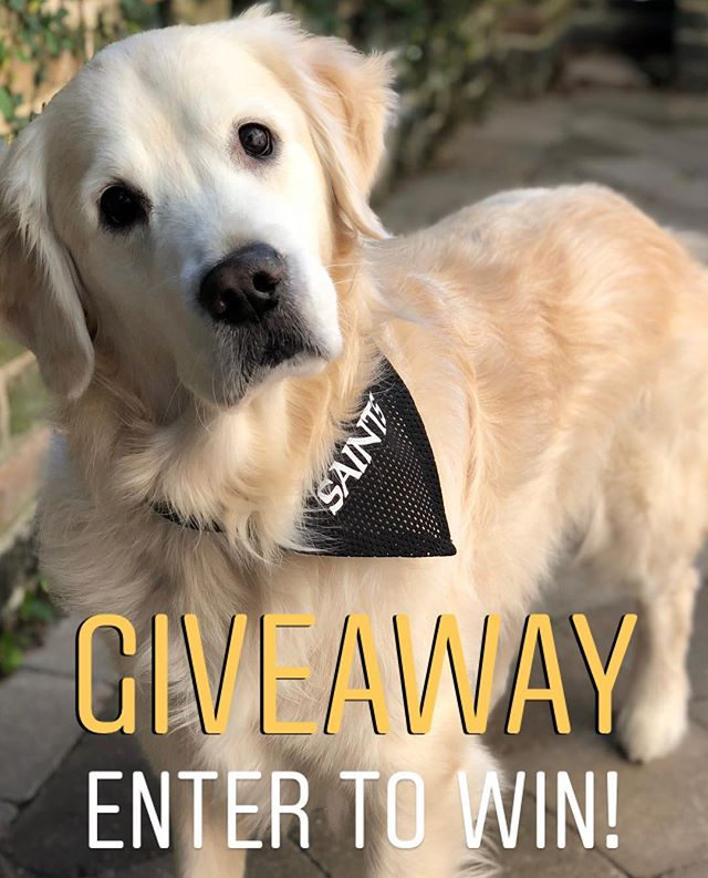 To celebrate our recent @theneworleansadvocate feature, we're giving away 2 FREE #restlesslion dog collars!🦁 . . To enter, follow @restlesslion and tag a furry friend! 🐾 The winners will be announced Monday at 12pm CST! . #frontpagelion #fbf #tgif #goldenretriever #goldensofinstagram #goldensofig #goldensofinsta #goldensofinstaworld #topdogphoto #dogsofig #dogsofinstagram #retreiveroftheday #ilovegolden_retrievers #retrieversgram #noladogs #nolanewsgram #slpets #nolapets #giveawaycontest #dogcollarswag