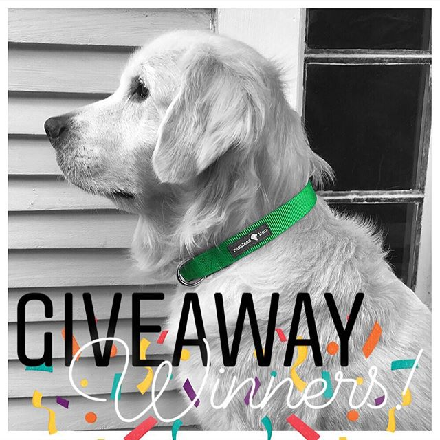 Congrats to our #restlesslion dog collar giveaway winners @mr.churchill.the.golden & @biscuitbiscotti! Thanks to everyone that participated! 🦁🐾 . . . #frontpagelion #goldenretriever #goldensofinstagram #goldensofig #goldensofinsta #goldensofinstaworld #topdogphoto #dogsofig #dogsofinstagram #retreiveroftheday #ilovegolden_retrievers #retrieversgram #noladogs #nolanewsgram #slpets #nolapets