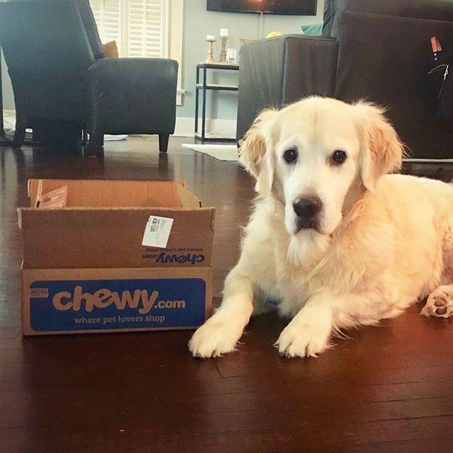 Making sure the latest delivery of treats is dry 🦁☔️#restlesslion #rainymonday . . . #maplemansion #sassylion  #goldenretriever #goldensofinstagram #goldensofig #goldensofinsta #goldensofinstaworld #topdogphoto #dogsofig #dogsofinstagram #retreiveroftheday #ilovegolden_retrievers #retrieversgram #noladogs #nolanewsgram #slpets #goldenpupsquadfeature #nolapets #chewyboxlove #doggosofnola