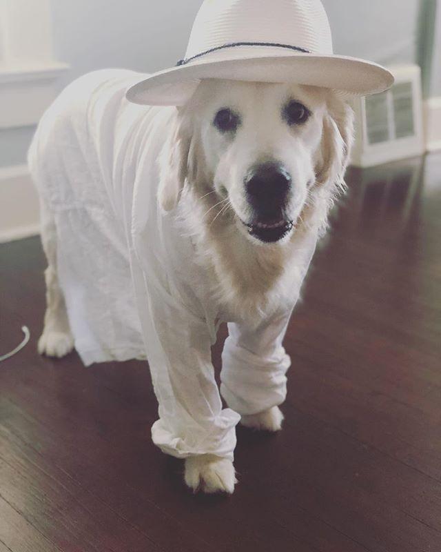 White Linen Lion 🦁 🦁#restlesslion . . . #goldenretriever #dogsofig #doggos #nolapets #dogsofinstaworld #noladogs #doggosofnola #nola #nolalife #nolanewsgramotw #goldenpuppy
