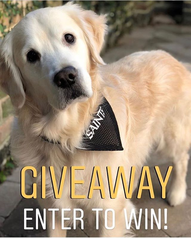 To celebrate the @saints win, we're giving away two FREE @restlesslion dog collars! 🦁 .  To enter, follow @restlesslion and tag a furry friend! 🐾 Winners will be announced Tuesday 12pm CST .  #neworleanssaints #saintsvsravens  #goldenretriever #goldensofinstagram #goldensofig #goldensofinsta #goldensofinstaworld #topdogphoto #dogsofig #dogsofinstagram #retreiveroftheday #ilovegolden_retrievers #retrieversgram #noladogs #nolapets #giveawaycontest #dogcollarswag