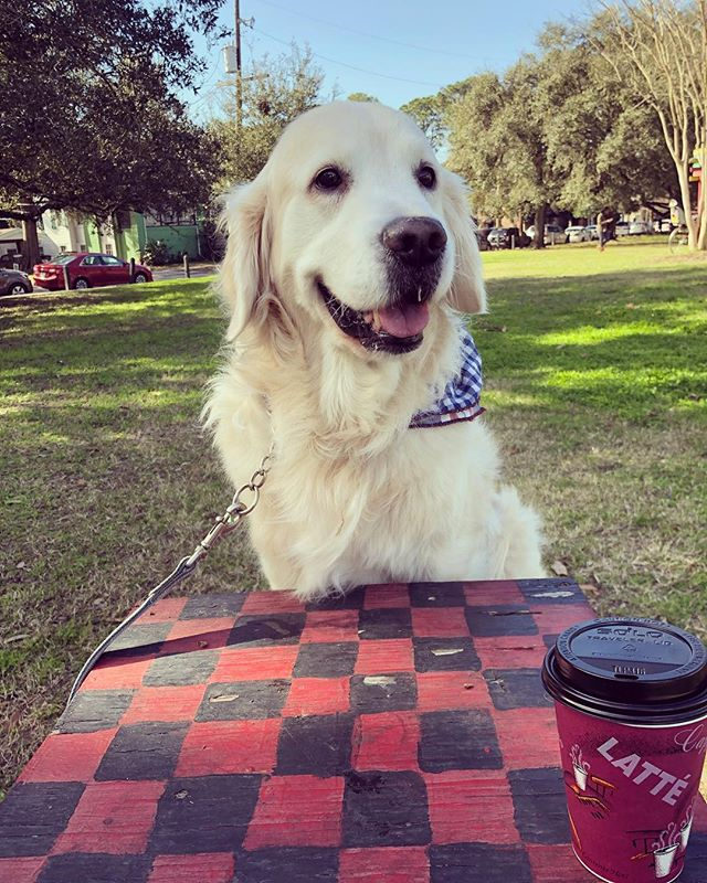 Your move, sir. 🦁 🦁 #restlesslion #learnedlion #checkerslion . . . #goldenretriever #goldensofig #goldenretrievers #goldensofinstagram #goldensofinsta #retriever #cutepuppy #topdogphoto #dogsofinstagram #dogsofig #dogsofinsta #nola #noladogs #nolapetsofinstagram #nolapets