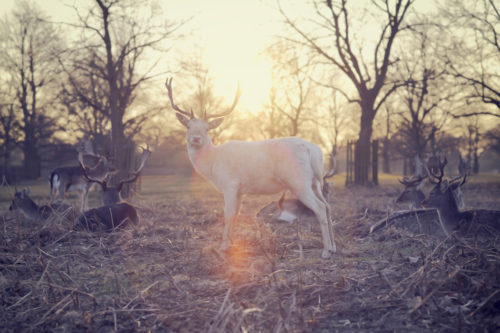 deer-e1476384740975.jpeg