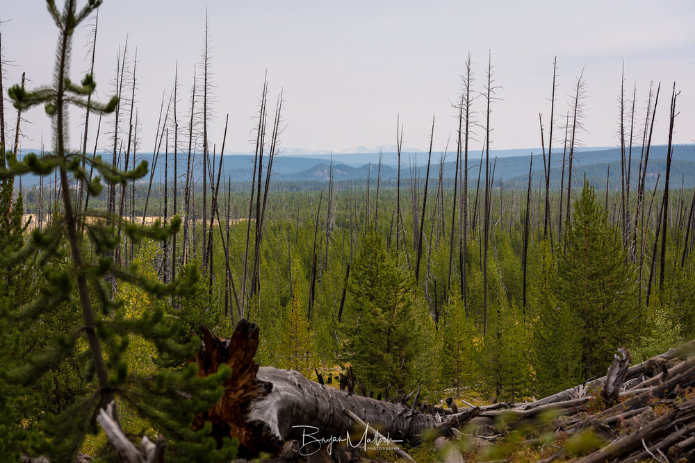 Remnants of previous fires are everywhere in the park