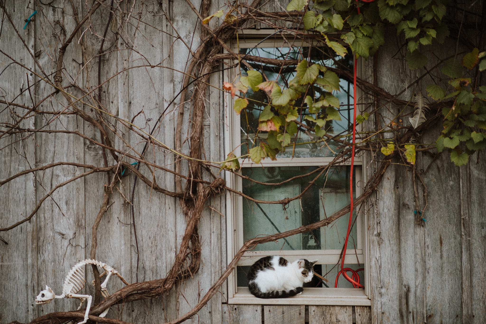 ApkePhotography_Tricia+Mike_WestVirginiaWedding_Farm_77.jpg