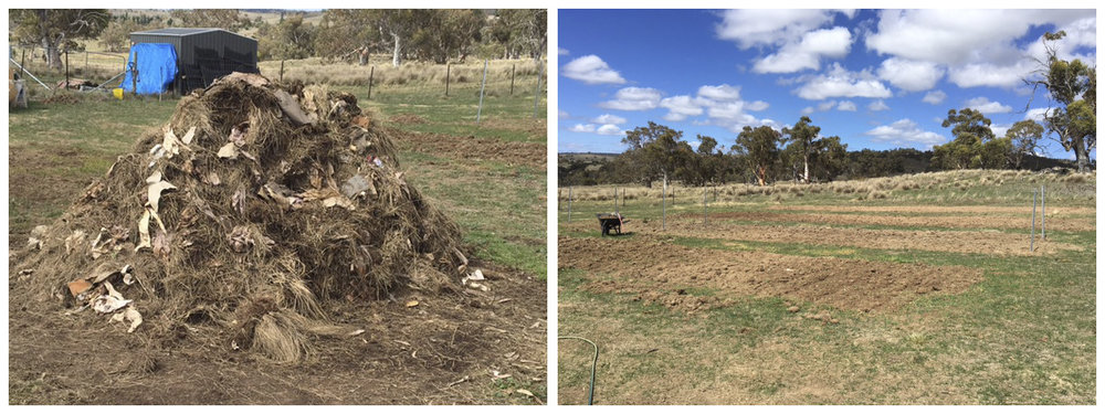 The hot composting pile (left) is a good source of enrichment for the new vegetable patches (right)