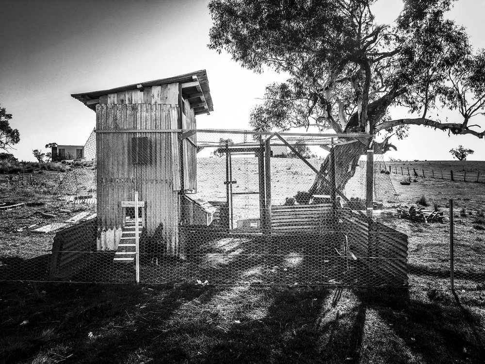 chook_shed_07.jpg