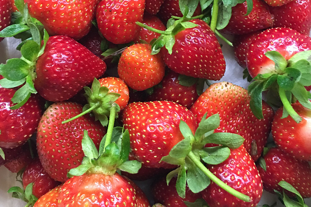 Strawberries are having a long season with many large and beautifully shaped fruits