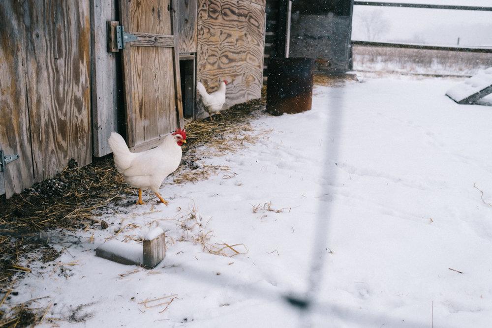 xmas eve snow-13.jpg