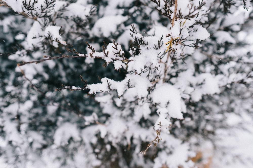 xmas eve snow-19.jpg