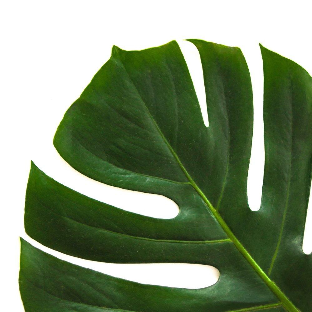 beautiful-botanical-bright-912413.jpg