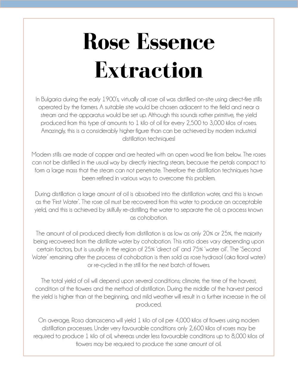 Rose27.jpg