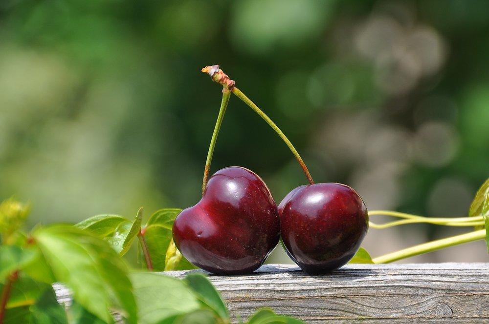 cherry-pair-fruits-sweet-162689.jpeg