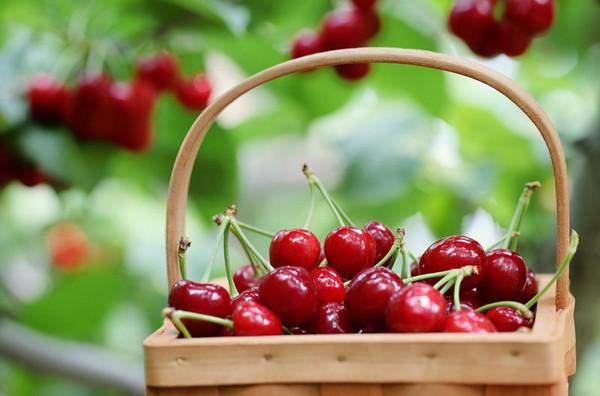 thecherryorchard-farbe.jpg