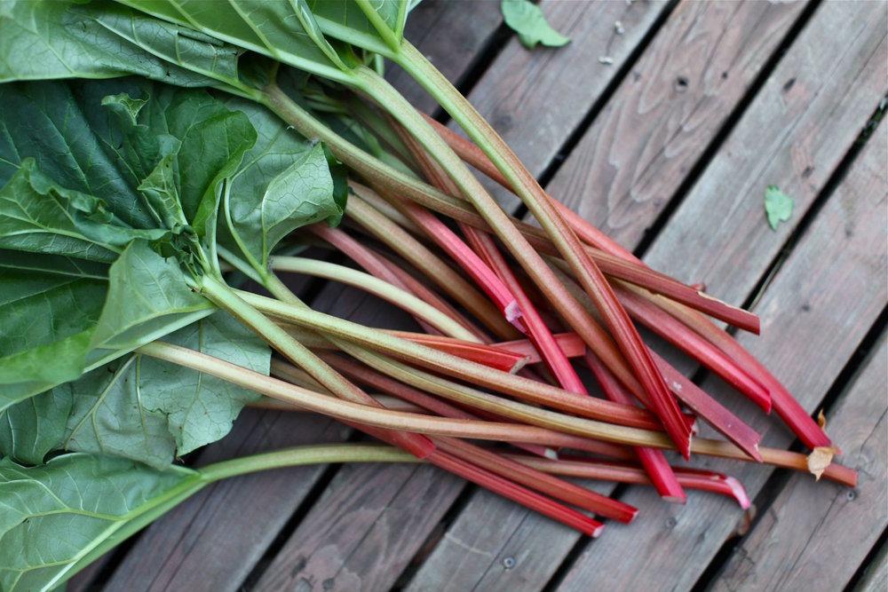 rhubarb copy.jpg
