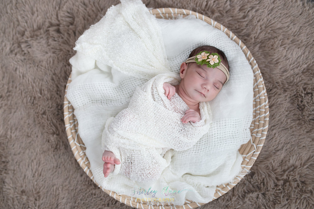 posed newborn photographer waltham ma