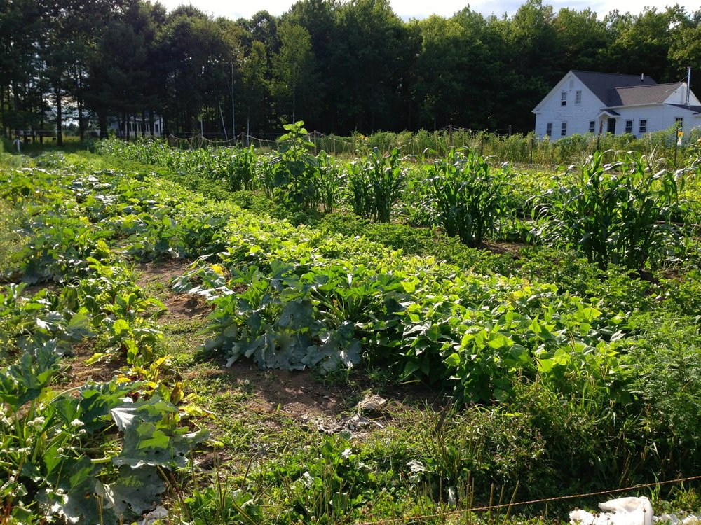 The Island Farm  - Take a ride to Second Wind Farm, an organic and sustainable farm right on island where the Inn sources many of its root vegetables. Meet with Farmer Chuck and learn all about how he started the farm and his mission for it as it grows. Visit the farm stand for some produce and hand-made wooden spoons.