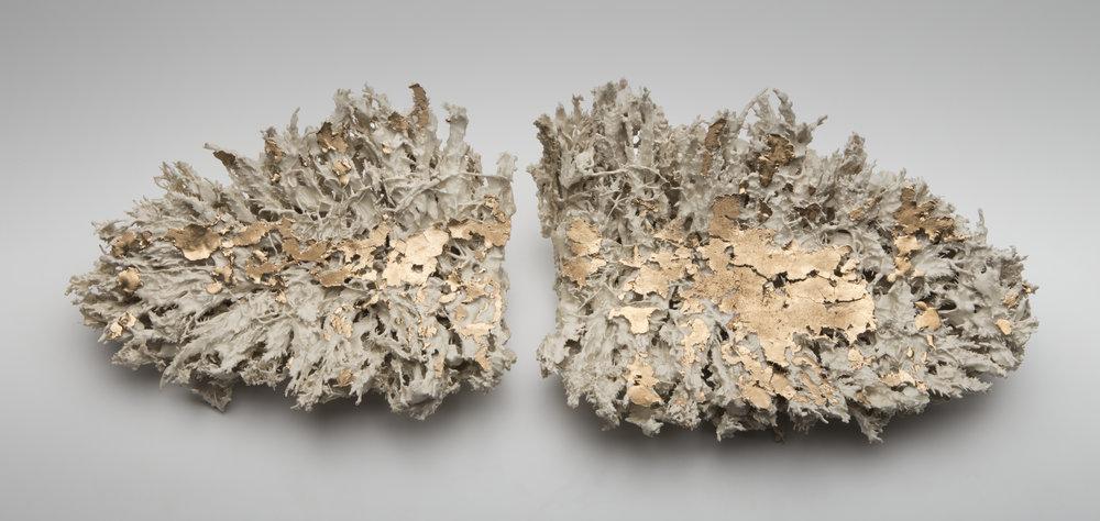 Mycelia 30''x14''x6''