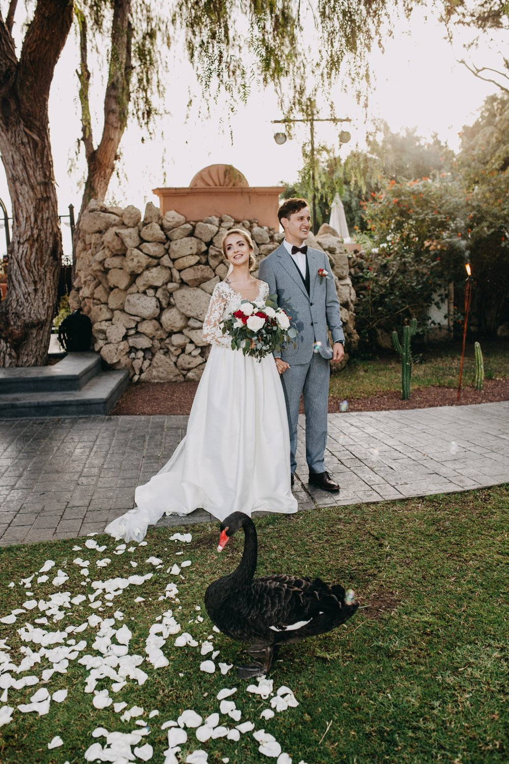 Black swans that swim in the lake where the ceremony takes place. They are friendly and love to come out to newlyweds after their ceremony :)