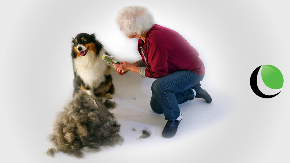 LUMO-Sheepdog.jpg