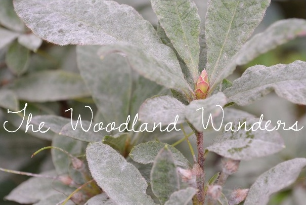 The Woodland Wanders  - For Blog Posts.jpg