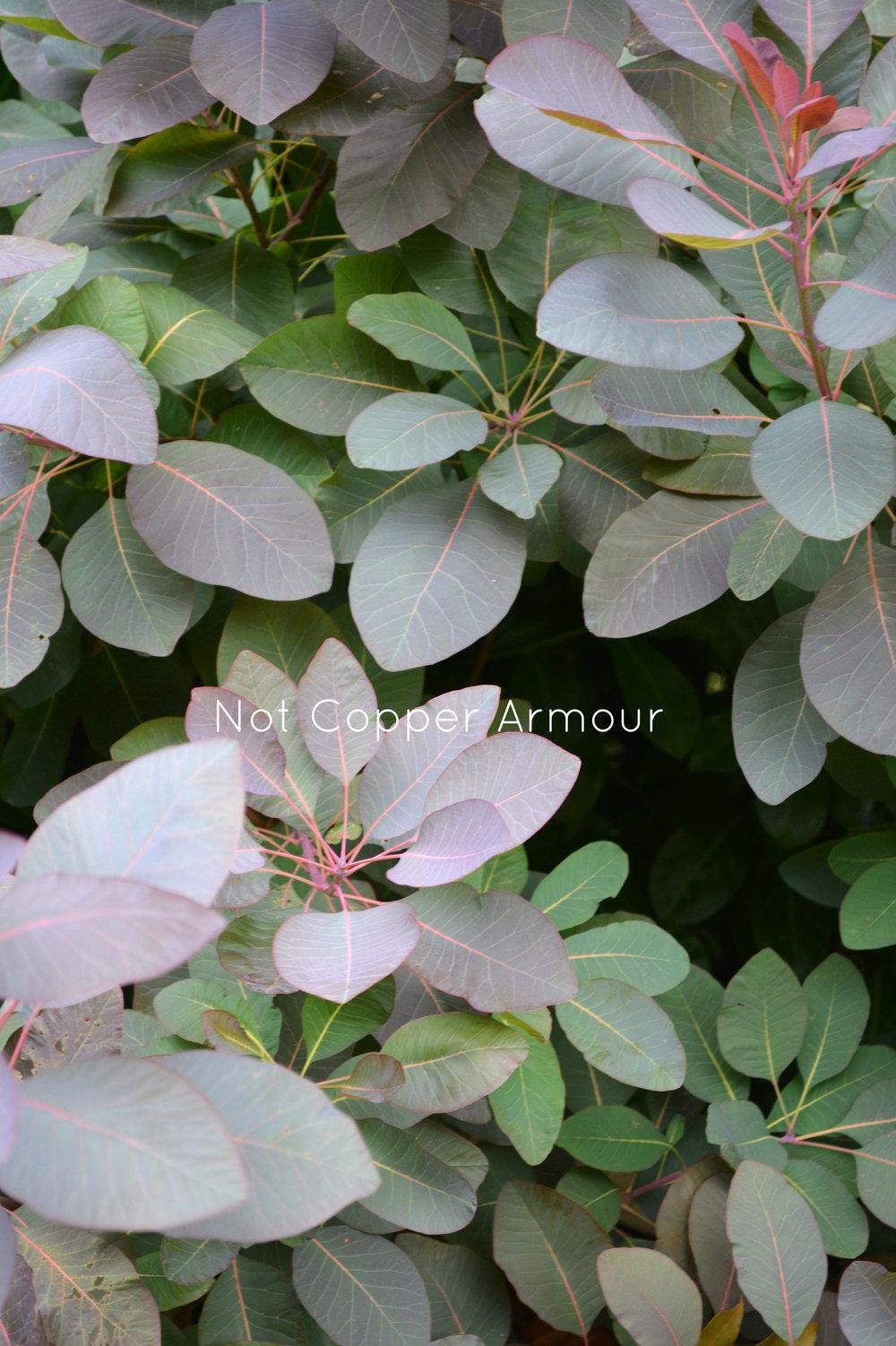Not Copper Amour - WM #07.jpg