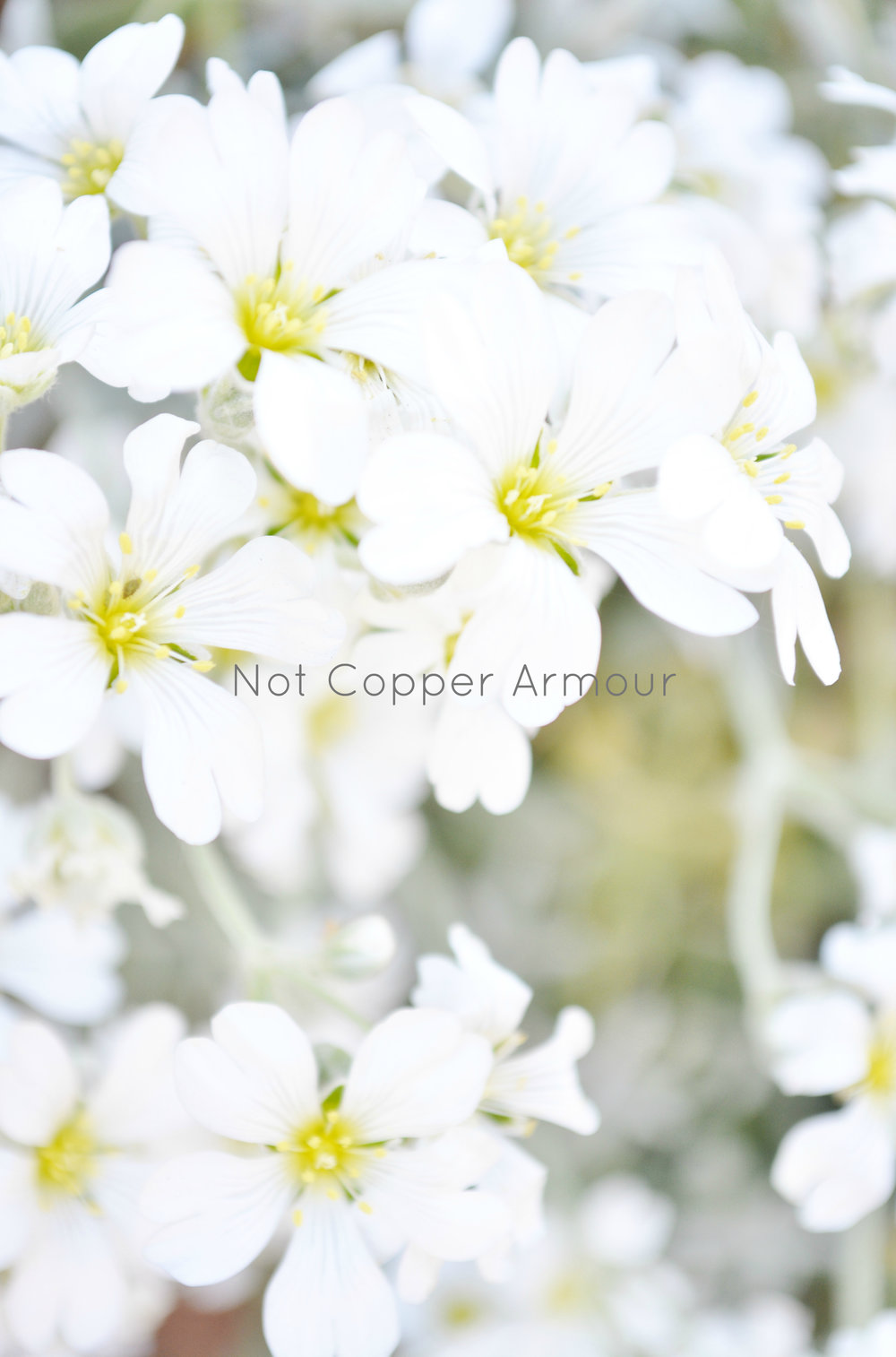 Not Copper Amour - WM #10.jpg