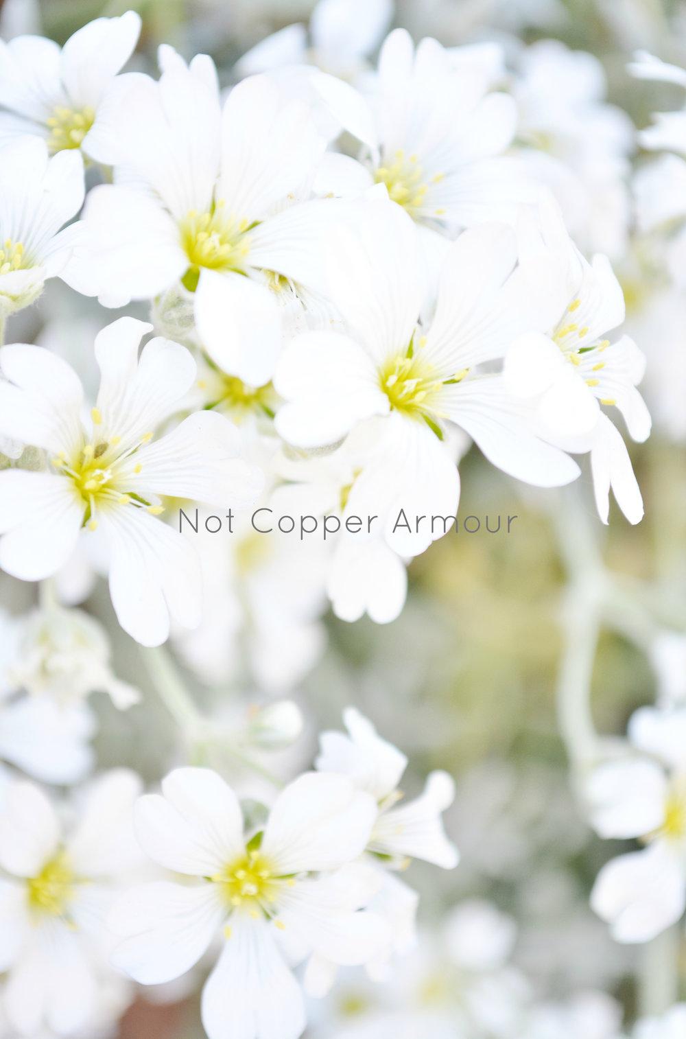 Not Copper Amour - WM #10.jpg