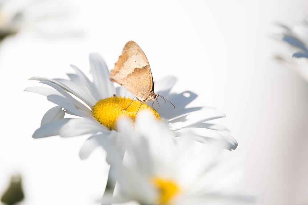 butterfly-1612496.jpg